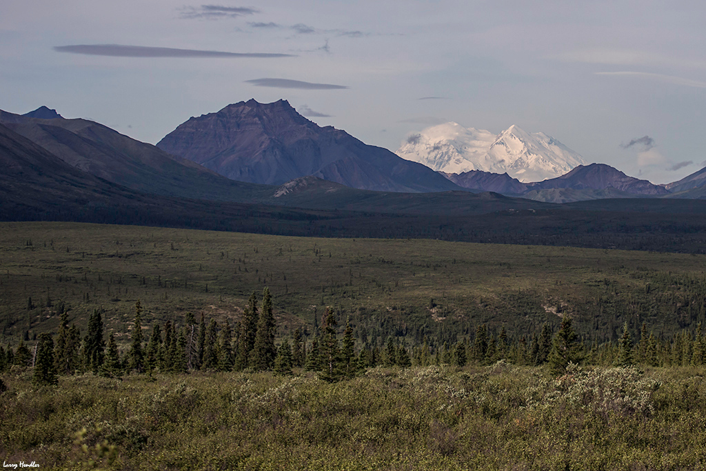 IMAGE: https://larryhendler.smugmug.com/Latest-Uploads/Alaska-Eagles-and-Denali/i-NQwsbTW/0/O/3S9B6725.jpg